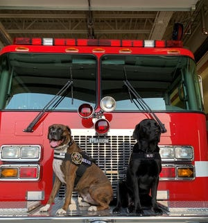 Bear, left, and Tesla are the first members of Western Lakes Fire District's therapy K9 program.