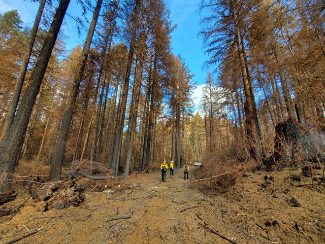 Damage from wildfires at the Shellburg Falls area in the Santiam State Forest.