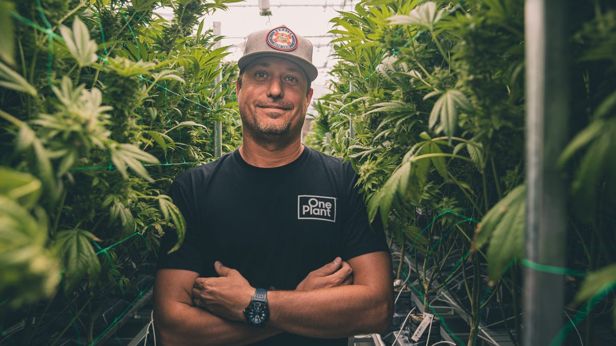 In the Know: Growing number of Cannabis options on Bonita 'Buzz' Road; more JerseyMike's coming 2