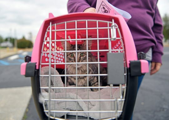 Pet owners pick up their animals in the parking lot at the People for Animals clinic in Millville on Friday, Sept. 18, 2020. The facility offers affordable pet care including spay and neuter services to reduce the numbers of homeless animals in local shelters.