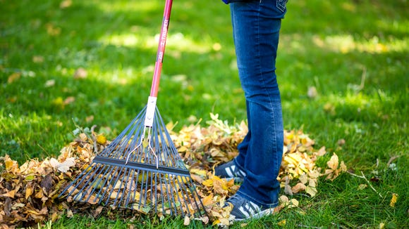 You have to rake anyways, why not make fun leaf jumping piles?