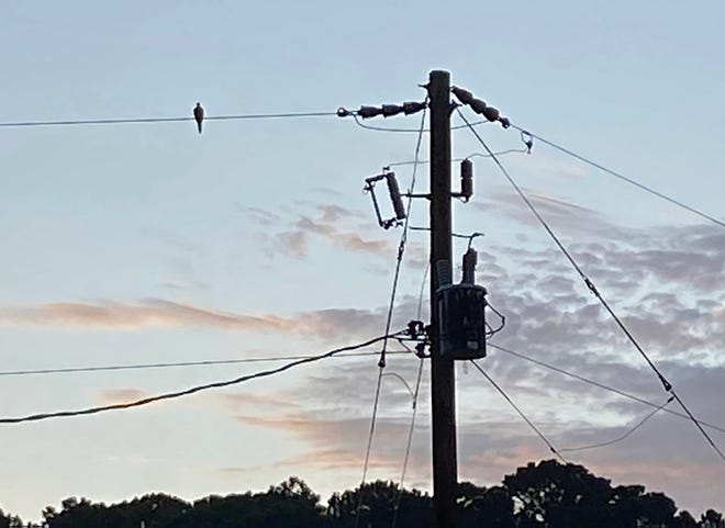A mourning dove rests on an electrical wire connected to a light pole and transformer.