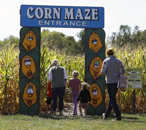 A family walks into the corn maze at the Maize at Little Darby Creek near Milford Center, which widened the paths of its maze this year to allow for more social distancing. Tickets to the Field of Fright, a haunted path with actors portraying creepy characters, must be purchased online.