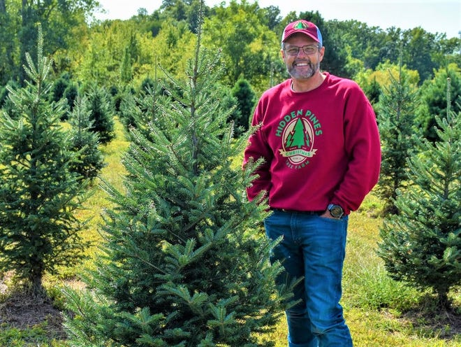 Alan Binger stands in the midst of  the hundreds of trees on his farm, Hidden Pines Christmas Tree Farm.