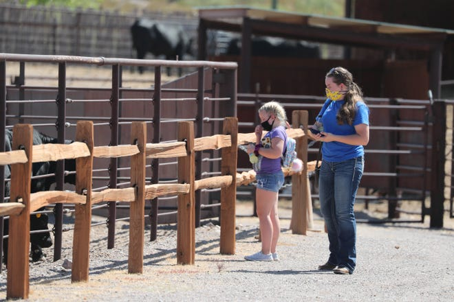 Melanie Landt and her boyfriend's little sister Raegan Manicki look at the 6-month-old calves at the New Mexico Farm and Ranch Museum on the day the museum reopened after being closed since March due to the COVID-19 pandemic.