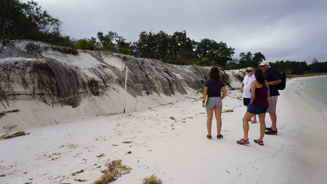 Nicole Grinnan leads a group of trained Heritage Monitoring Scouts on a mission to record the Deadman's Island archaeological sites in Gulf Breeze. This photo shows significant evidence of erosion at the site.