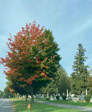 Trees committing false starts this time of year are not welcome to everyone.