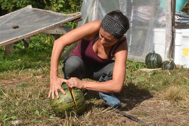 Rachel Sannerud, owner of Pluck Flower Farm, opens up a pumpkin after using a machete Thursday, Sept. 24, 2020, in Milaca.