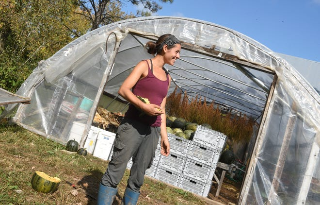 Rachel Sannerud, owner of Pluck Flower Farm, explains the difference in seeds for the new pumpkins she's growing Thursday, Sept. 24, 2020, in Milaca.