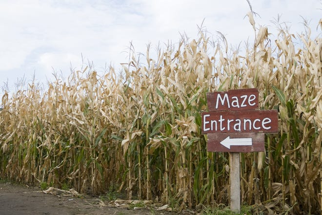 Coombs Barnyard's corn maze will be open for Flashlight Fridays at 6:30 p.m. Fridays through Oct. 30 plus Oct. 3, 11 and 17. The maze will also be open during the Barnyard Bash from 1 to 4 p.m. Sundays in October.