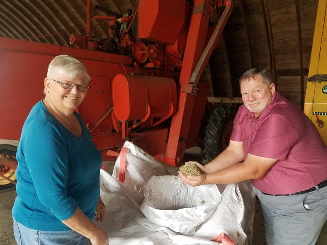John and Dorothy Priske are innovative farmers who enjoy experimenting with new things, especially if it will contribute to the health of the soil.  Their most recent venture has been raising Kernza, a perennial grain with numerous benefits.