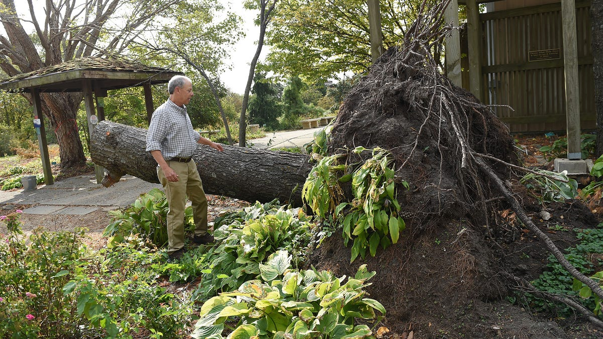 Iowa nature centers, state parks work to recover from 'heartbreaking' derecho devastation
