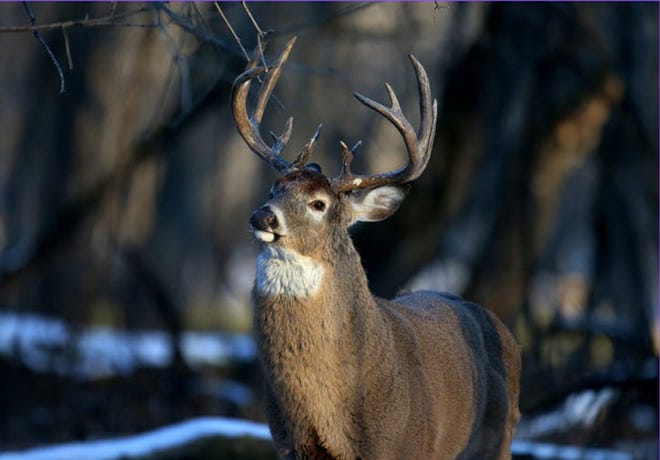 Remaining Deer Management Permits in several Wildlife Management Units available to hunters.
