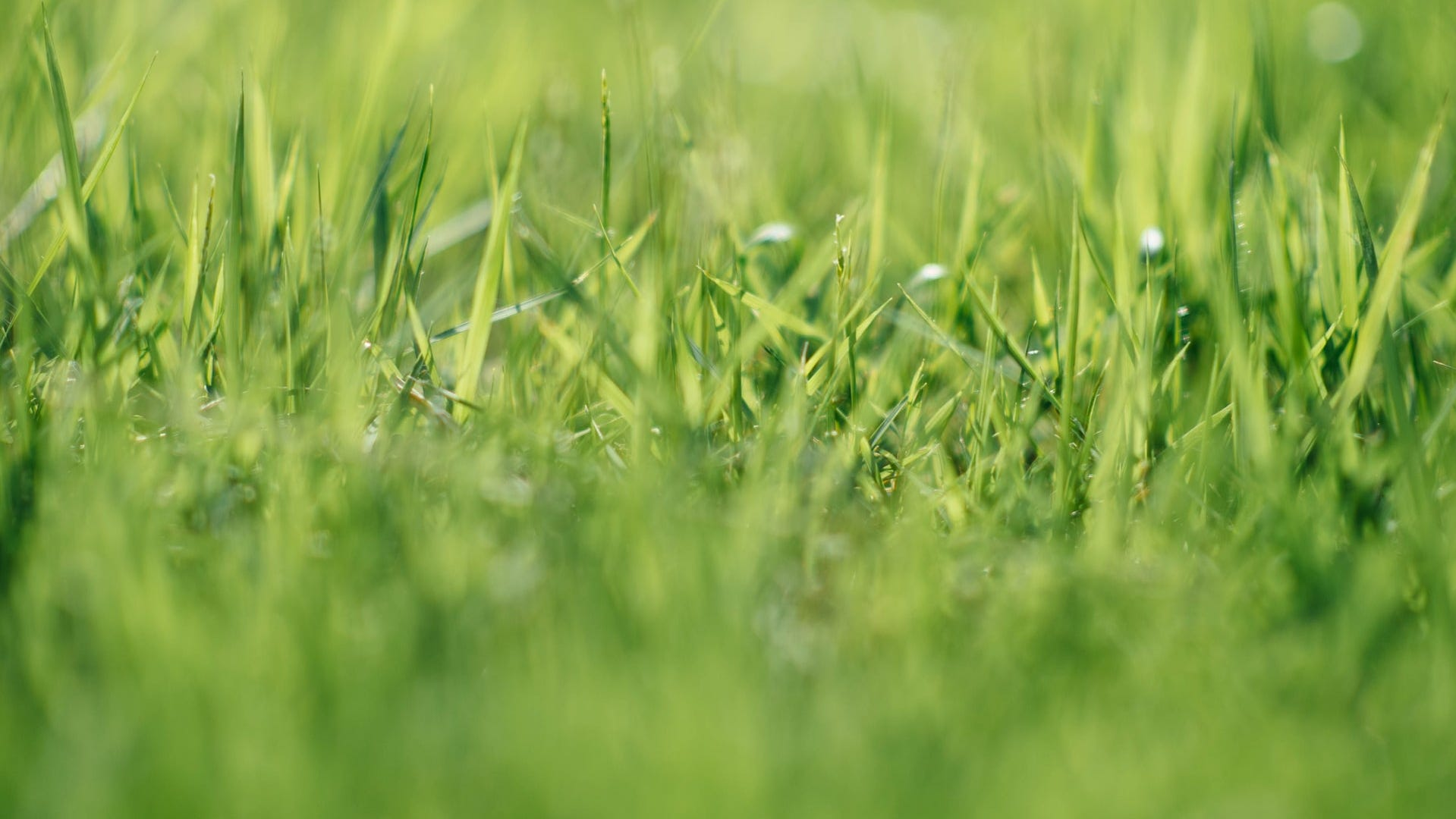 Getgrassy.org has information to help you keep your lawn healthy all year long.