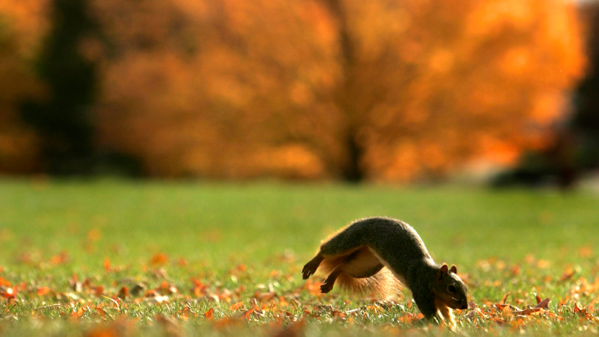 With fall here, it's time to get your lawn ready for a long winter's nap.