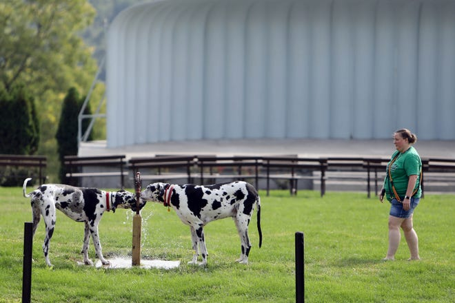 April Blunk watches her two Great Danes, Hank and Max, drink water during the first of their two daily walks Wednesday at Crapo Park in Burlington.