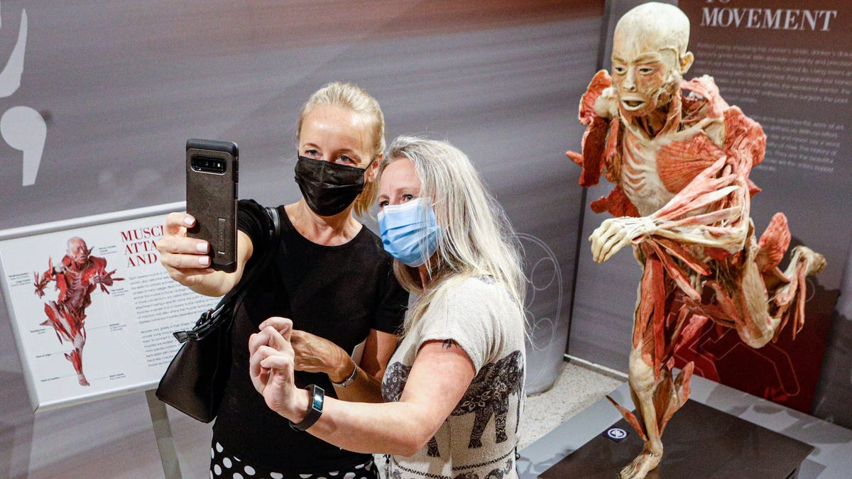 'Real Bodies' exhibit returns to science center; will feature COVID-19 gallery