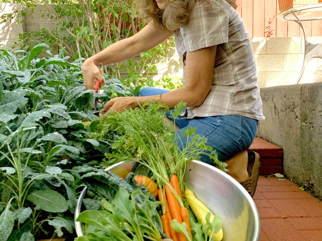 Joanne Corwin picks vegetables from her backyard garden. This summer she participated in the Seed to Supper, basic gardening classes online. The six-part series was presented by New Mexico State University's Cooperative Extension Service's Ideas for Cooking and Nutrition program.