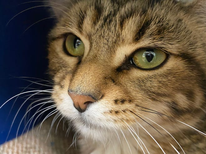 You can meet Dragonfly during a visit to the Oshkosh Area Humane Society.