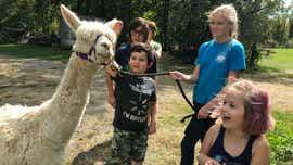Shady Lane Alpacas open house offers outdoor fun