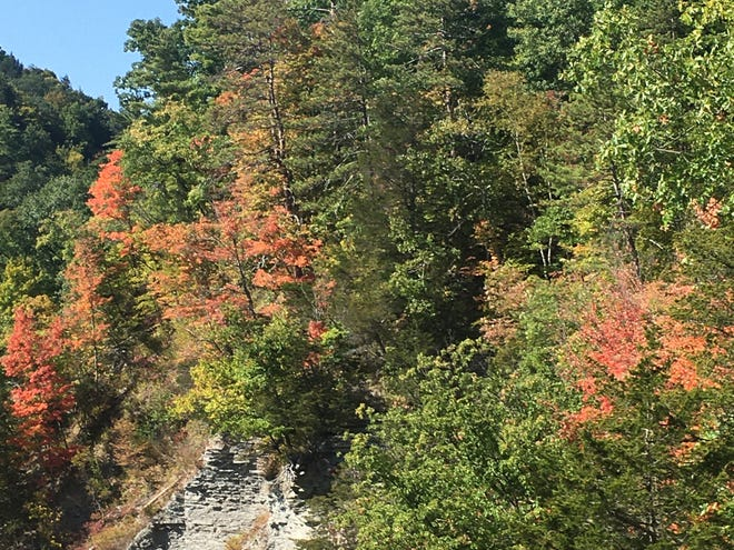 The area of Letchworth State Park where the leaves display the most fall colors.