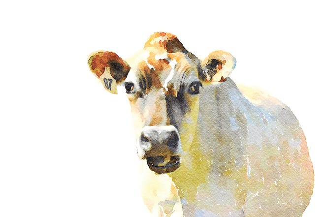 A watercolor painting of a cow.