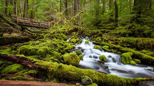 """Being in the Hoh Rainforest is like walking through a fairytale,"" says Heather Gyselman, REI Adventure Travel program manager for North America."
