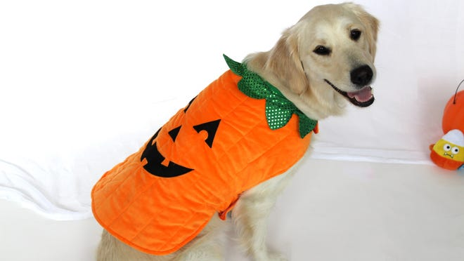 These are the best dog costumes you can get from Chewy.