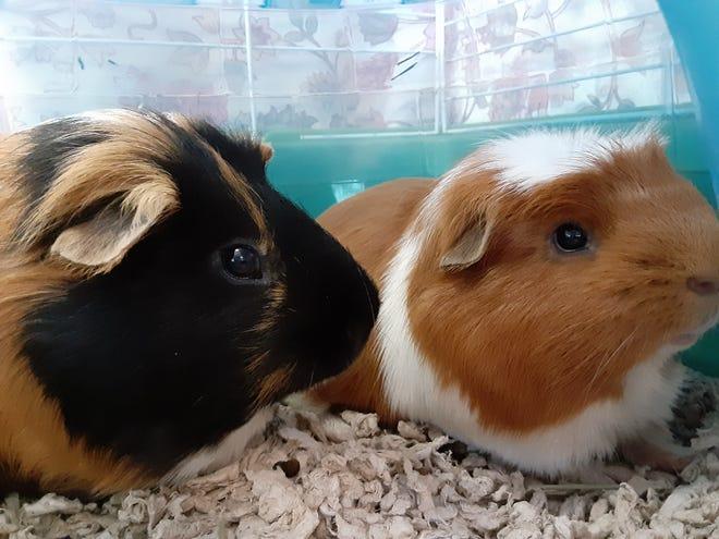 Kip and Bucky