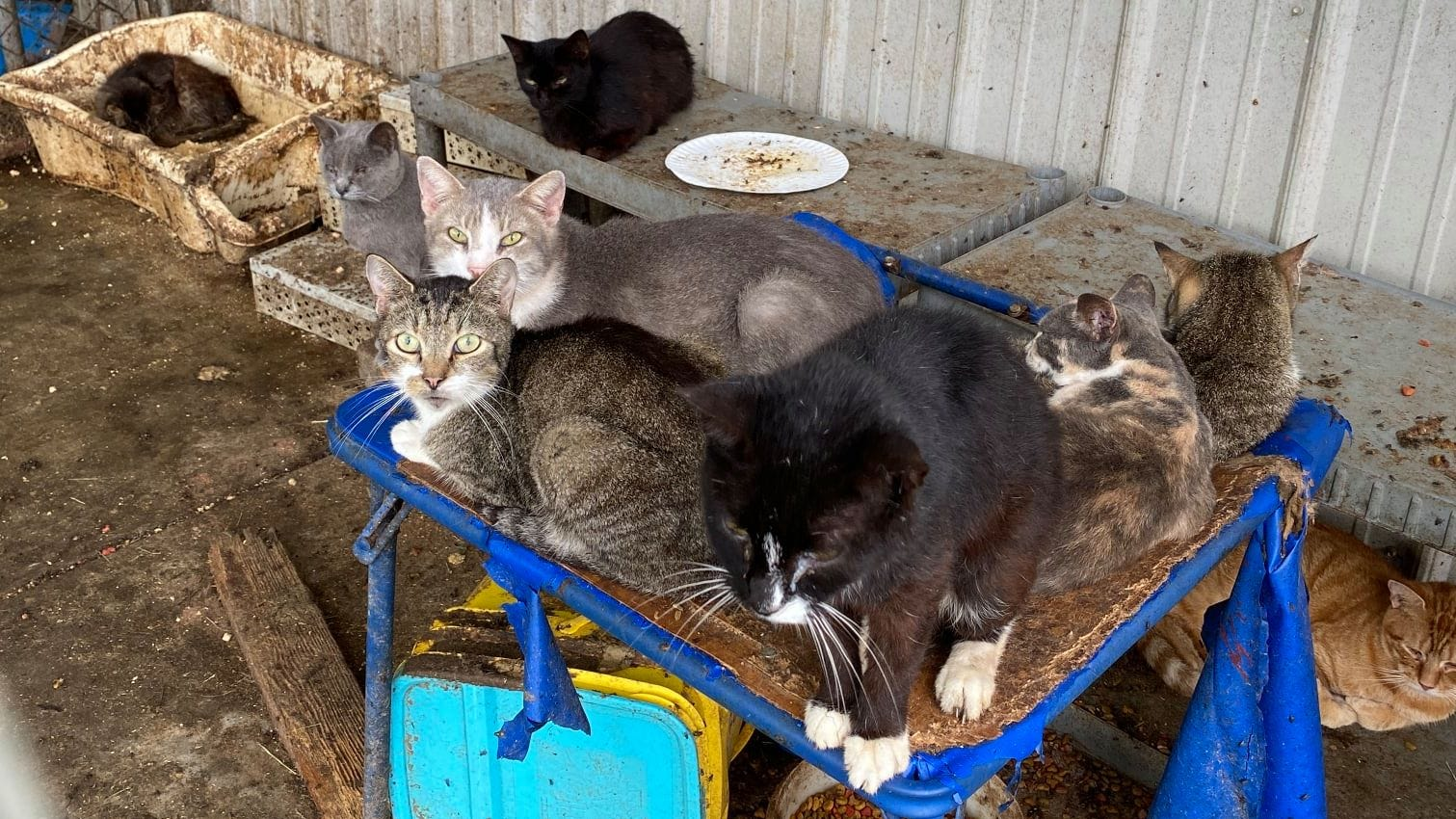 More than 180 cats, one dog found in Camden home
