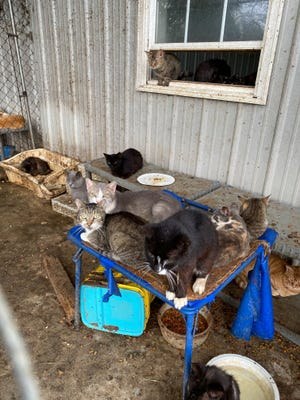 Officers from the Office of Animal Welfare's Delaware Animal Services unit found more than 180 cats at a Camden home during an investigation into animal cruelty.