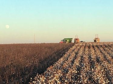 Ballard Farms in Kiowa County had a good cotton harvest last year (as pictured), and look forward to another good year as the 2020 cotton crop nears maturity.