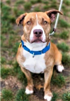 Mr. Feeny is looking for a home in Sandusky County.