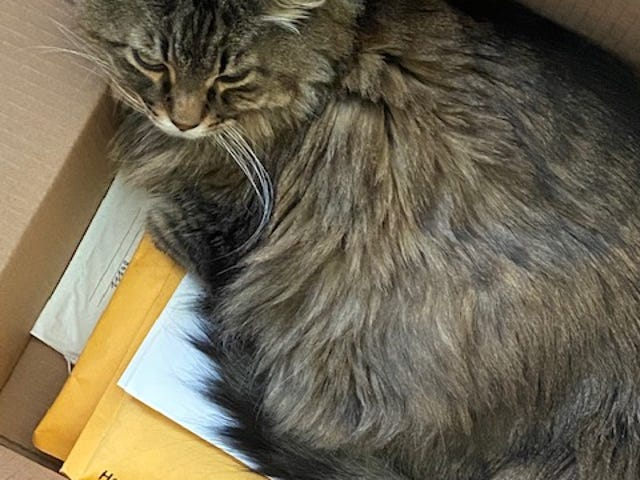 Many of the envelopes mailed to and from locations in Colorado were addressed to Manny The Cat, who spent many happy hours napping on his mail.