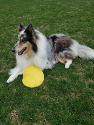 Annie Mae with her frisbee.