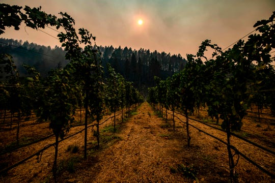 On September 28, smoke hangs between charred trees on the hillside behind a vineyard in California's Napa Valley.
