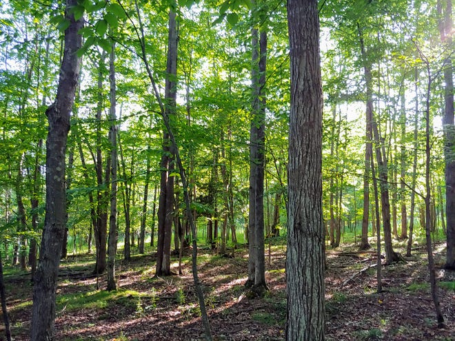 Cornell Cooperative Extension of Allegany County's Agriculture Program is hosting a woods walk led by Allegany County's Master Gardener, Dave Chamberlain.
