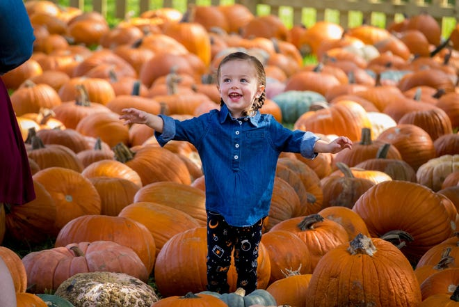 Emily Ohnmacht, of Jupiter, explores the pumpkin patch at Trinity United Methodist Church in Palm Beach Gardens in this 2019 photo. Money from the annual sale supports the budget of the youth ministry.