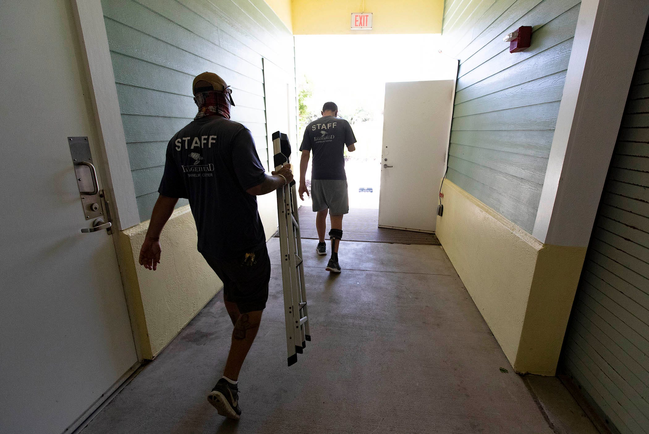 Andy Earl carries a ladder for Carter Viss Aug. 5 at Loggerhead Marinelife Center in Juno Beach, where they work. Viss had just finished feeding fish in the aquariums that require balancing on a ladder to drop food into the top of the tanks.