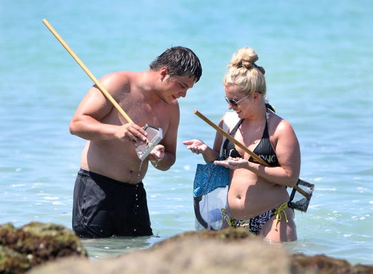Justin and Heather Johnson, who vacationed at Venice and Caspersen Beach from Texas in July, 2014, look for sharks teeth. Visitors from all parts of the state and country come to Caspersen Beach to sift through shells and sand to take home sharks teeth and fossils.