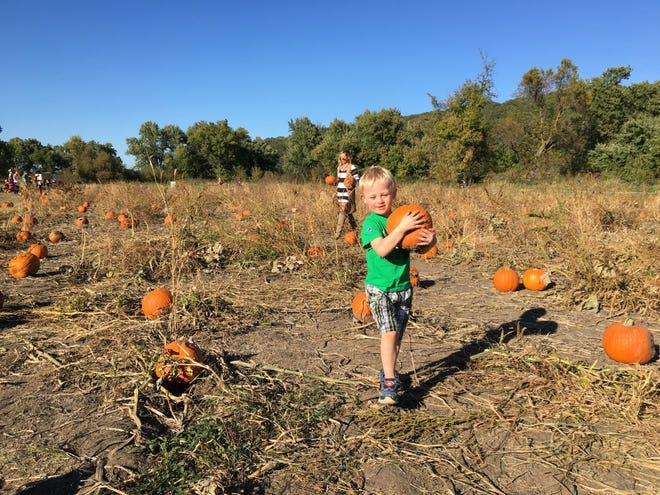 The festival is open to hopeful pumpkin-pickers the first three weekends in October, Saturday from 10 a.m. to 9:30 p.m. and Sunday from noon to 5 p.m.