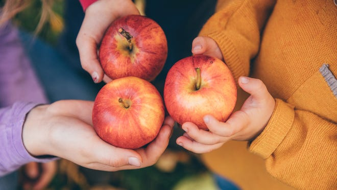 How to safely go apple picking this fall