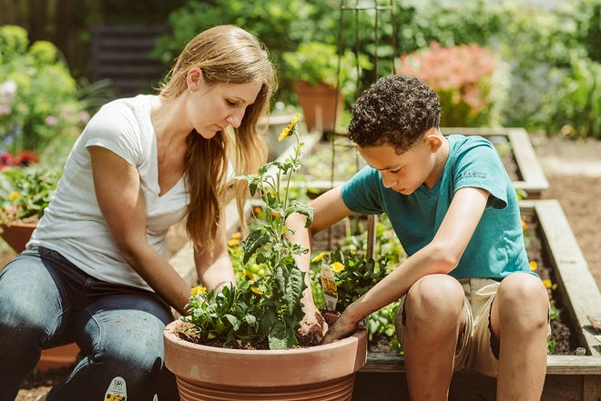 Gardening — whether in containers, raised beds or a backyard — is expected to keep climbing in popularity, according to a new trends report.