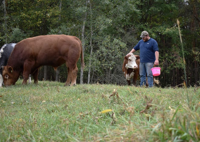 Caleb Bean of Cortlandville gives a pat to one of his cattle Wednesday as they graze in a pasture on his farm near McGraw. September was so dry that after just one day in the field, the greenery had been grazed enough to merit moving the herd, Bean said.