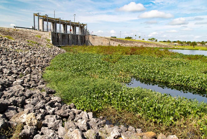 The Moore Haven Lock and Dam on the Caloosahatchee canal In Moore Haven is clogged with water hyacinth on Oct. 1.