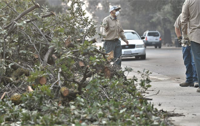 The branch of an oak tree along Main Street fell causing a crash that sent at least one woman to the hospital on Thursday, October 1, 2020.