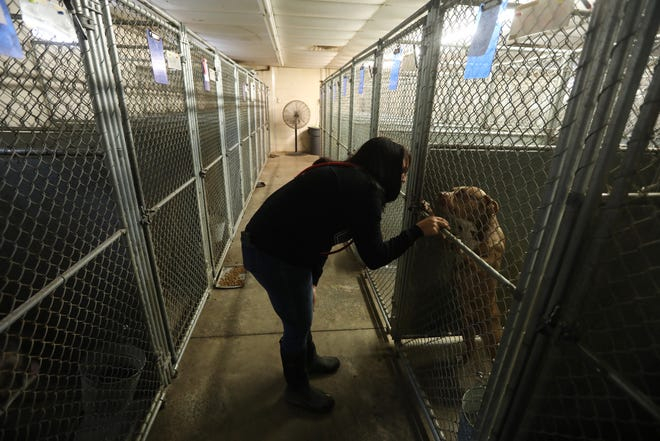 Volunteer Amanda Dunlap visits with a dog at the Muskingum County Dog Pound. A small army of volunteers help care for dogs at the antiquated building in Falls Township.
