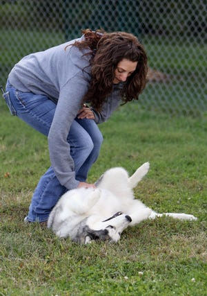 Sarah Schulz of Burlington gives her dog Hades a belly rub while visiting with Jim and Chris Metzler of Muscatine Friday at the Burlington Dog Park. Sarah was at the park with her dogs Hades and Sasha for a meet and greet with Apollo, who she is fostering from the Metzler's.