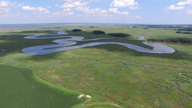 The Taylors Bridge area east of Townsend is characterized by the convergence of tidal marsh ecosystems and upland agricultural systems, both of which are vulnerable to the effects of sea level rise. Delaware Wild Lands is working to restore these areas by allowing for natural marsh migration.