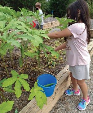 Children learn aboaut growing vegetables and fruit in the Children's Museum garden